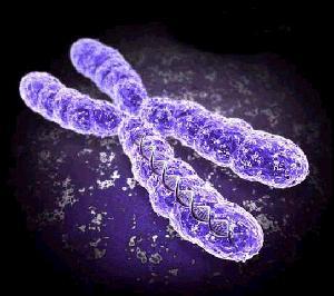 کروموزومه!